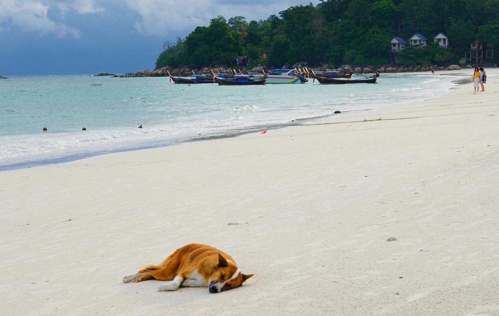 стране таиланд в августе погода отзывы любимого