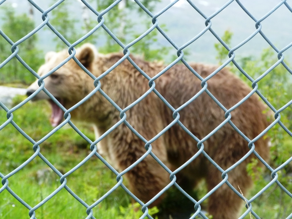 zoo report