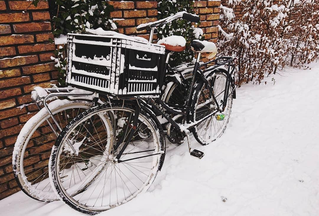 10 лет в стране тюльпанов и велосипедов: учёба, работа, получение паспорта