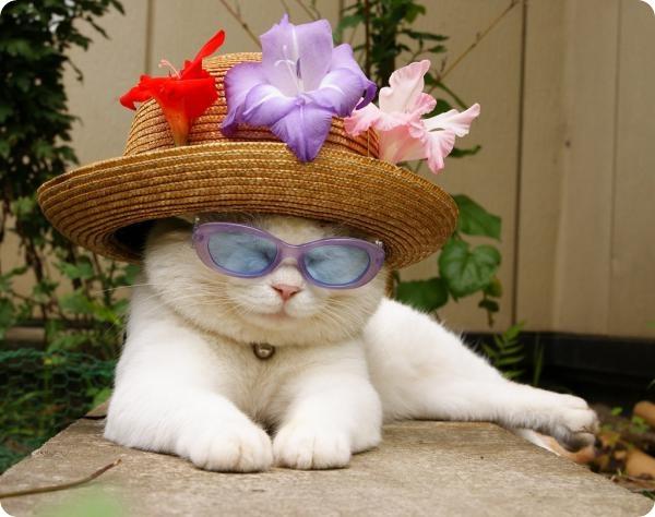 Самый смешные коты в мире