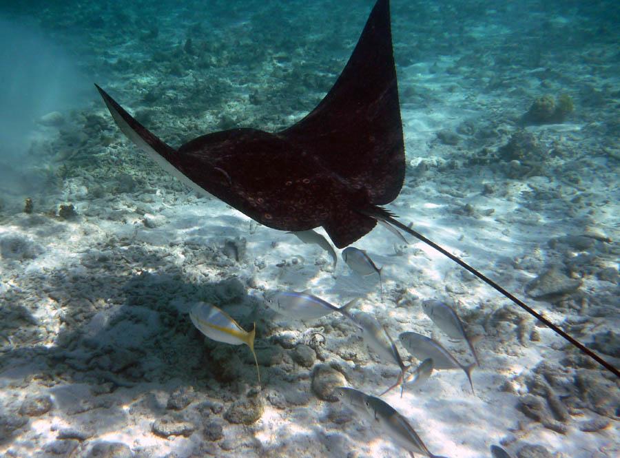 Подводное царство Белиза (декабрь 2010 г.)