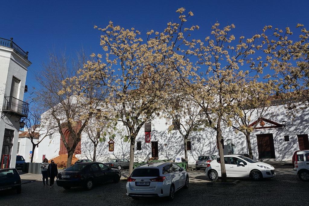 Зимняя неделя в Хересе (с разъездами на общественном транспорте по окрестностям).