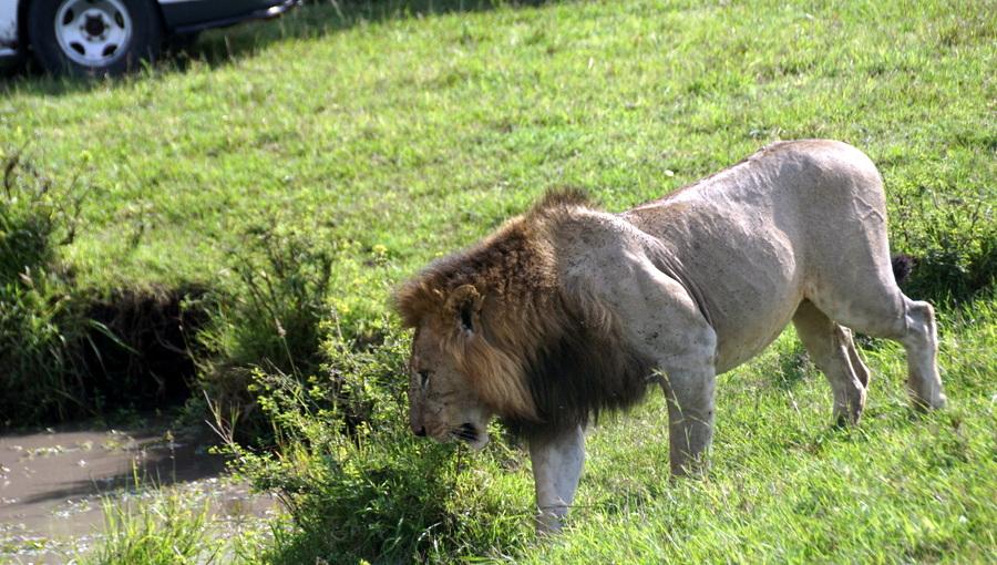 Кения октябрь 2017 - рай сафари и ад Найроби