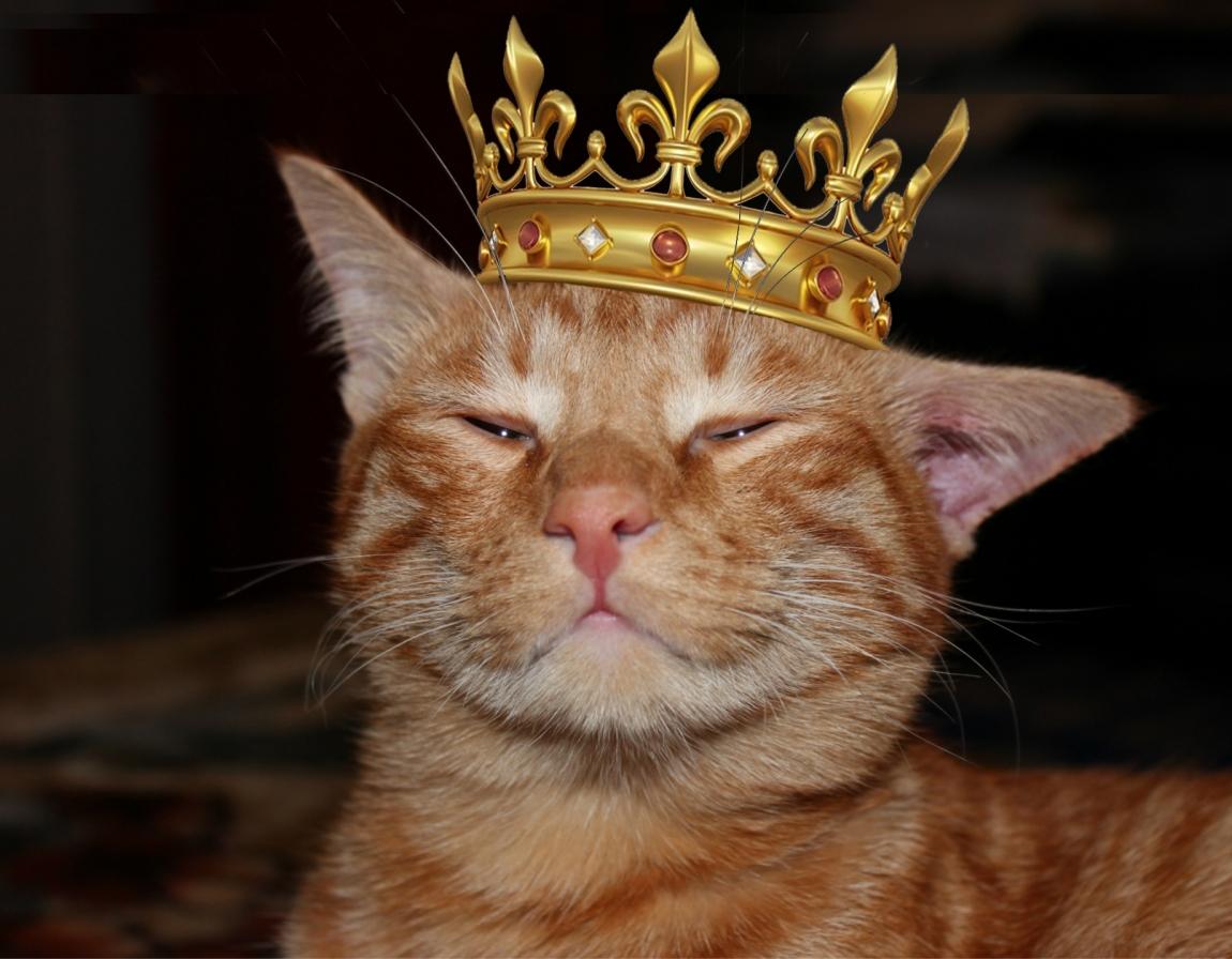 Король котов картинки