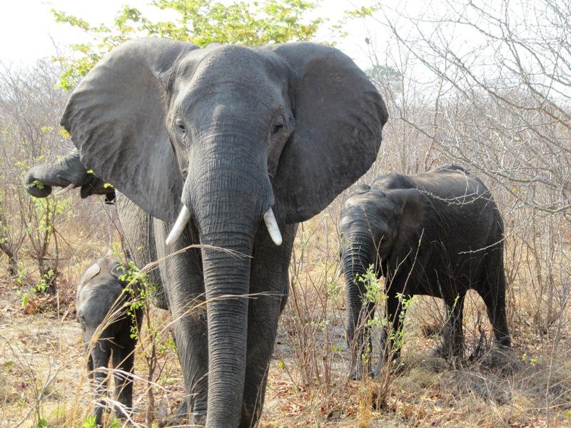 Зимбабве: несколько точек на карте
