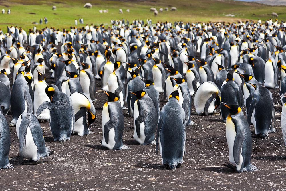 Новый 2013 год в Антарктиде: круиз на HAL Veendam из Рио-де-Жанейро в Вальпараисо