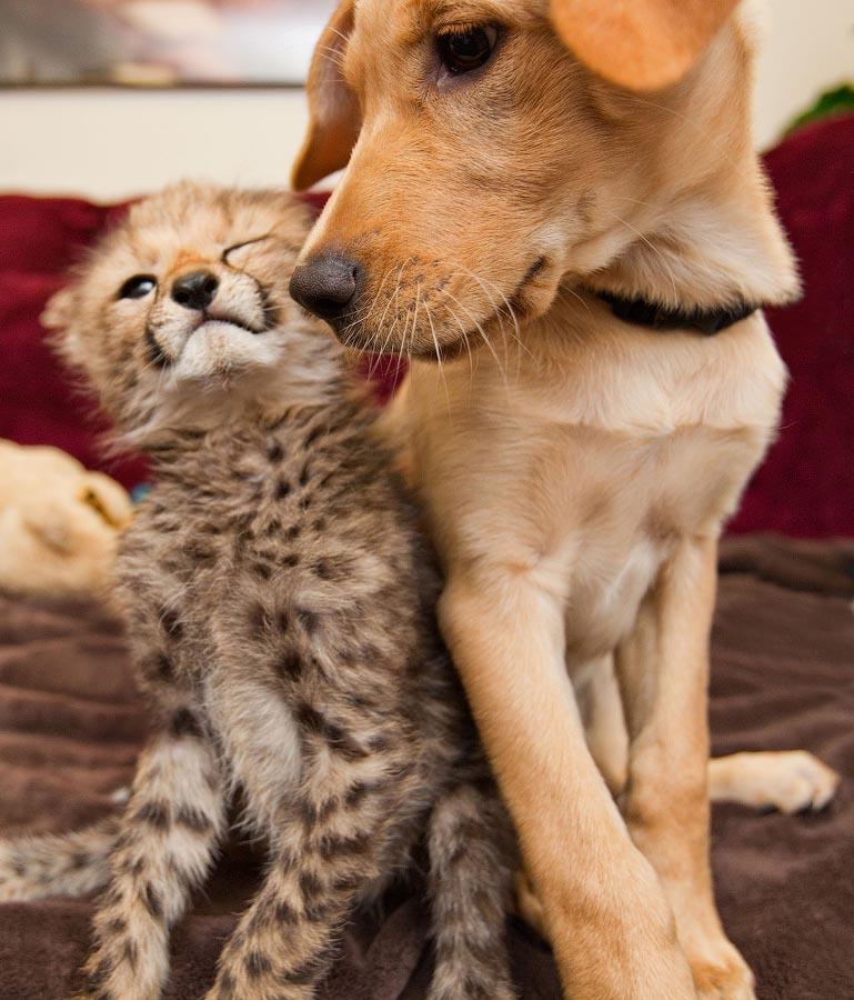 лепешек или дружные домашние животные фото нас много красивых