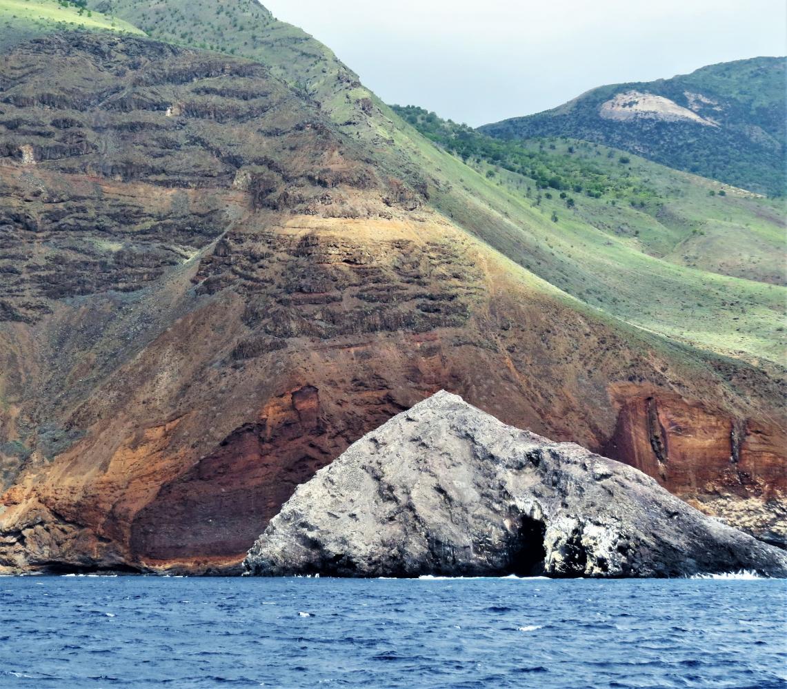 древо фото острова елена скалярий