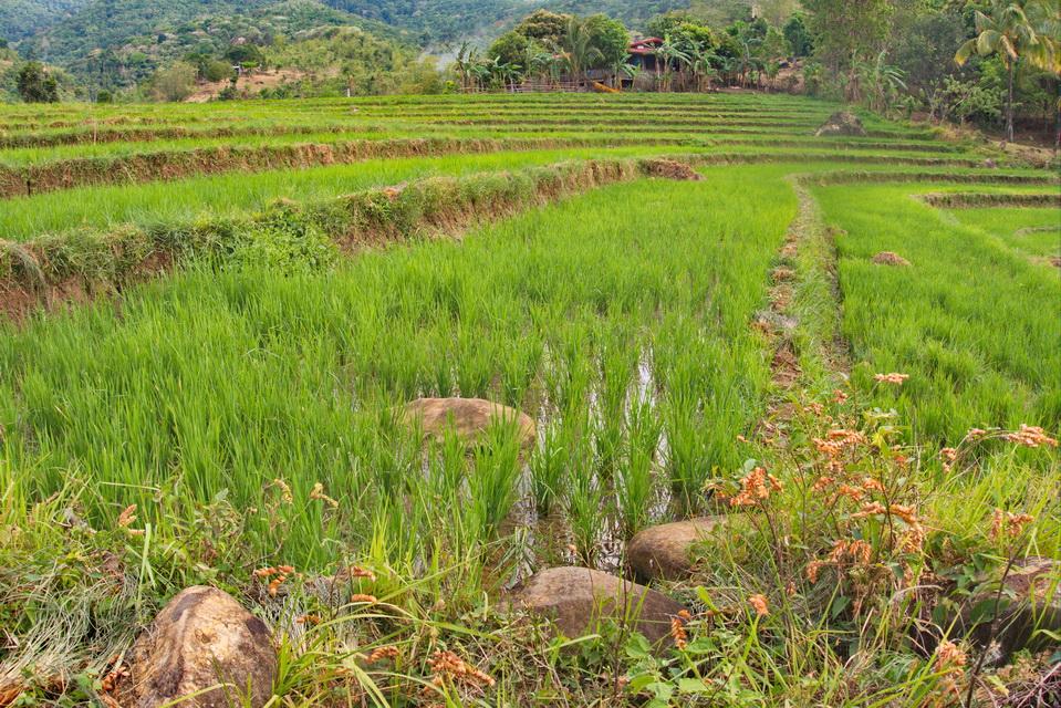 Жара-жара, или Филиппинский paradise на островах Негрос, Себу, Бусуанга.