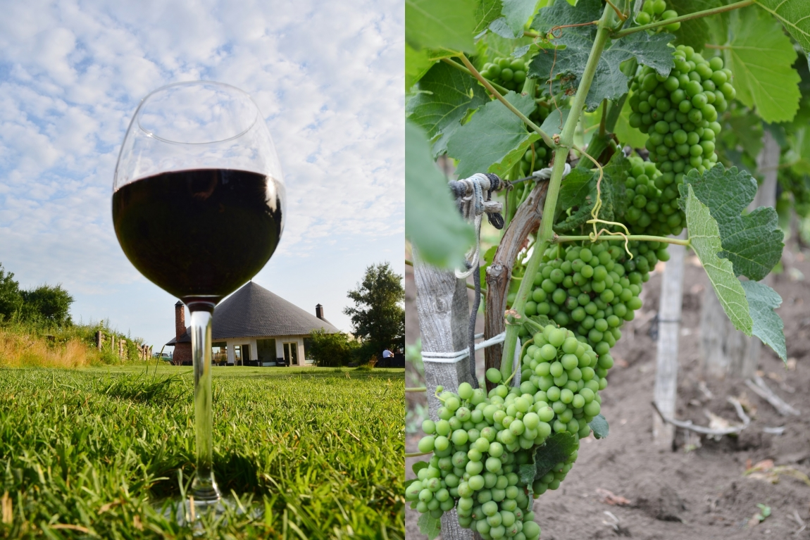 вина краснодарского края картинки король