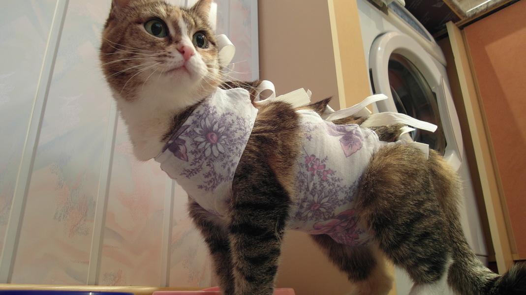 Как сделать что бы кот не хотел кошку 474