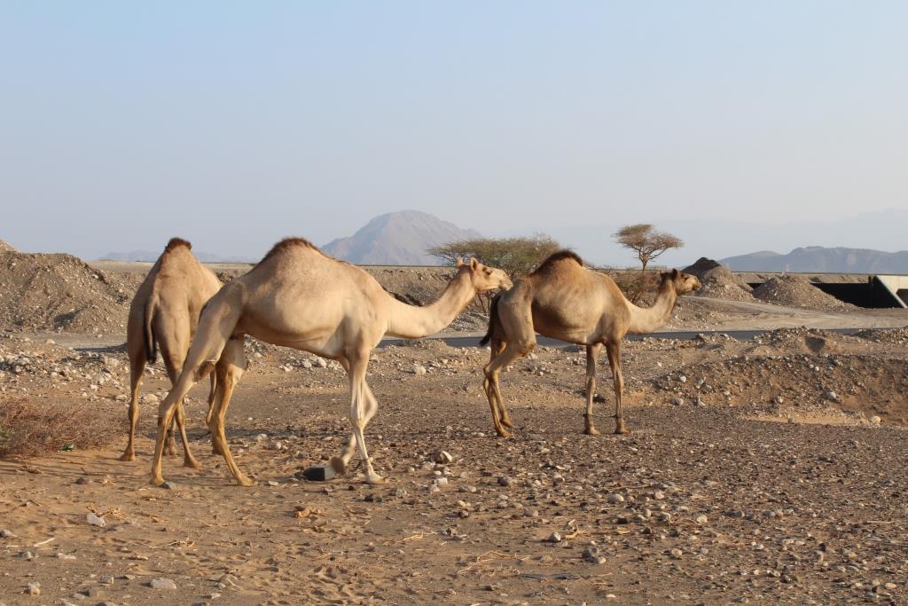 Оманские приключения (Маскат, Салала) октябрь 2018
