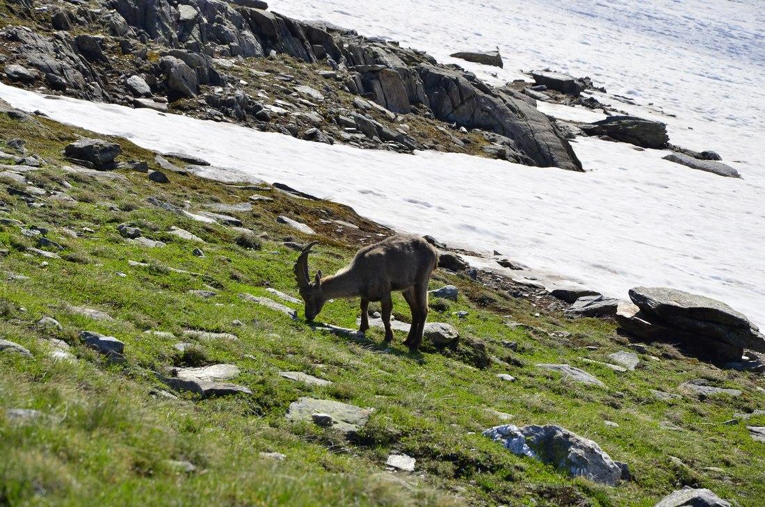 Долгий путь через Альпы (прогулки по горам, много фото)