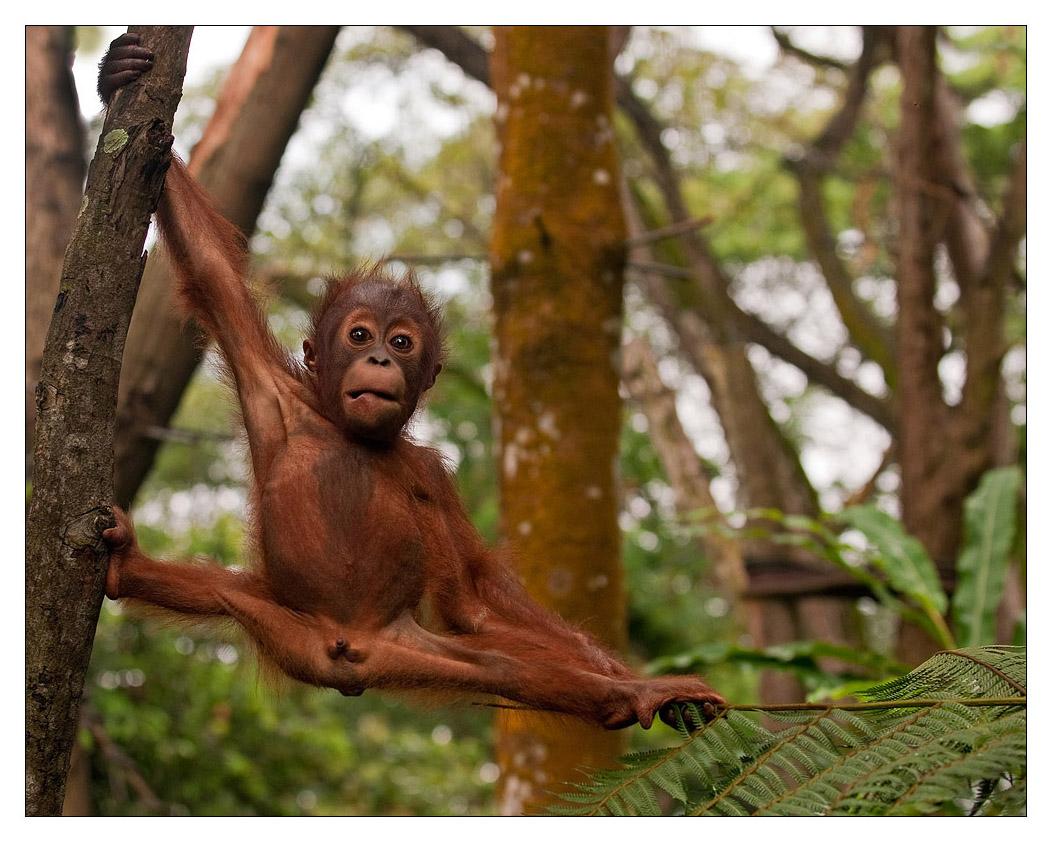 Sex xxx orangutan nude tube