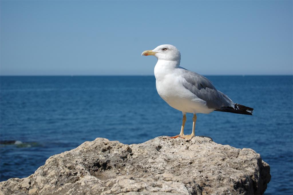 Морские птицы картинки с названиями