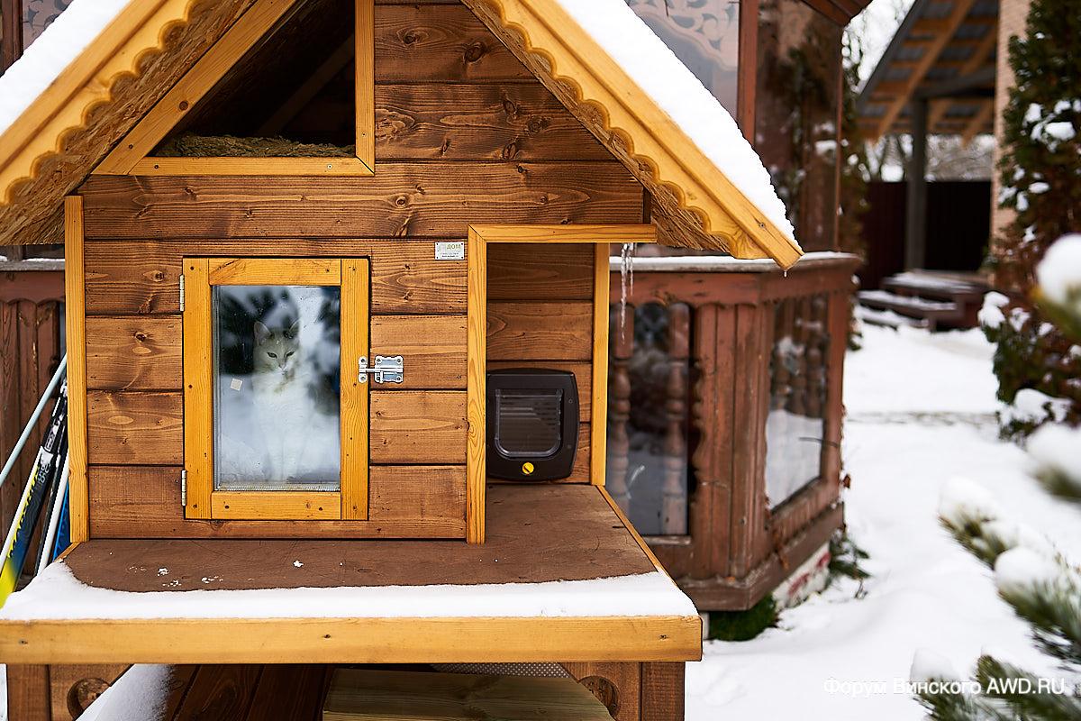 если спуститься уличный домик для кошек фото дня номере