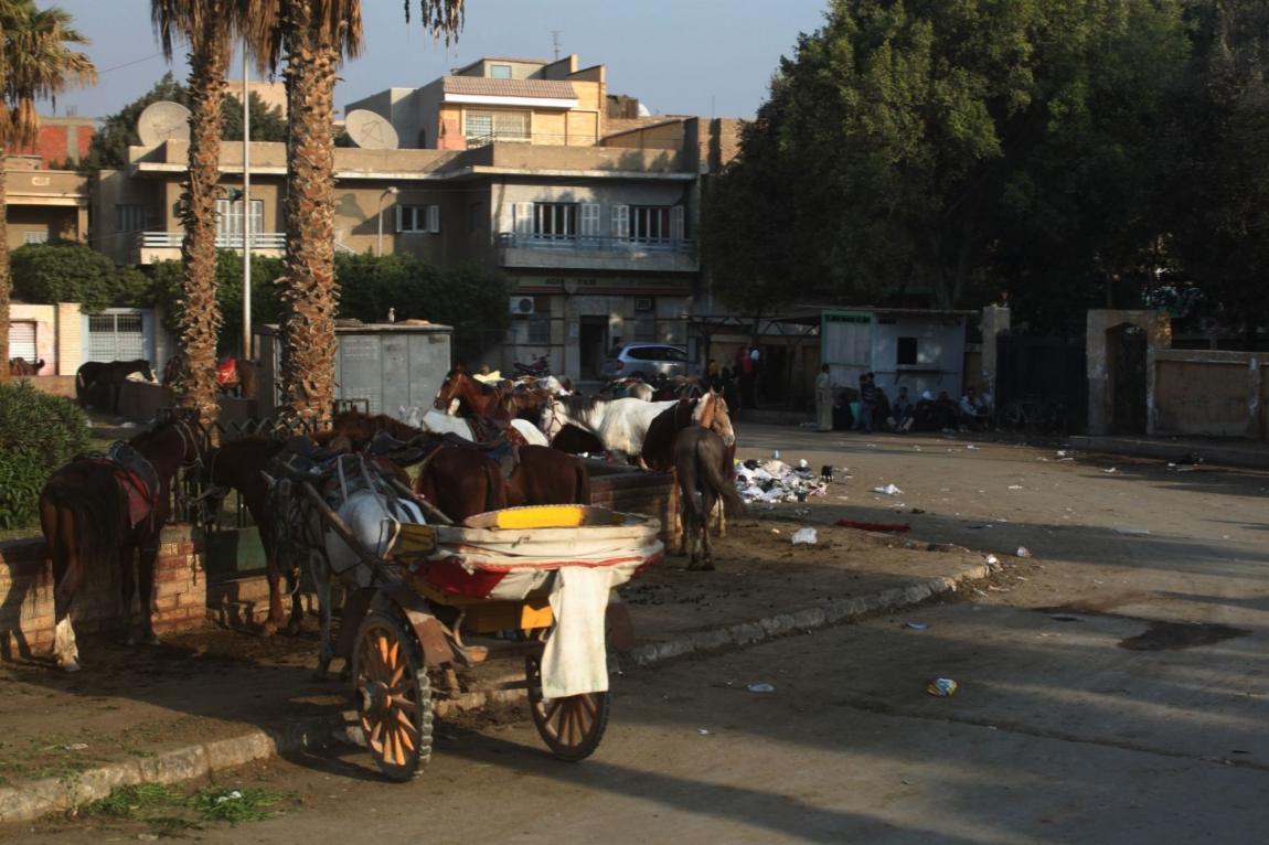 Новый Год в Хургаде. Каир.