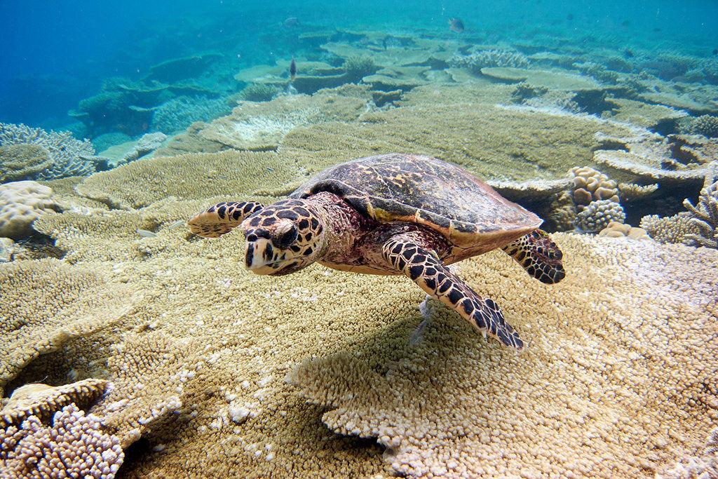гигантские черепахи на шри ланка фото журналиста является объективность