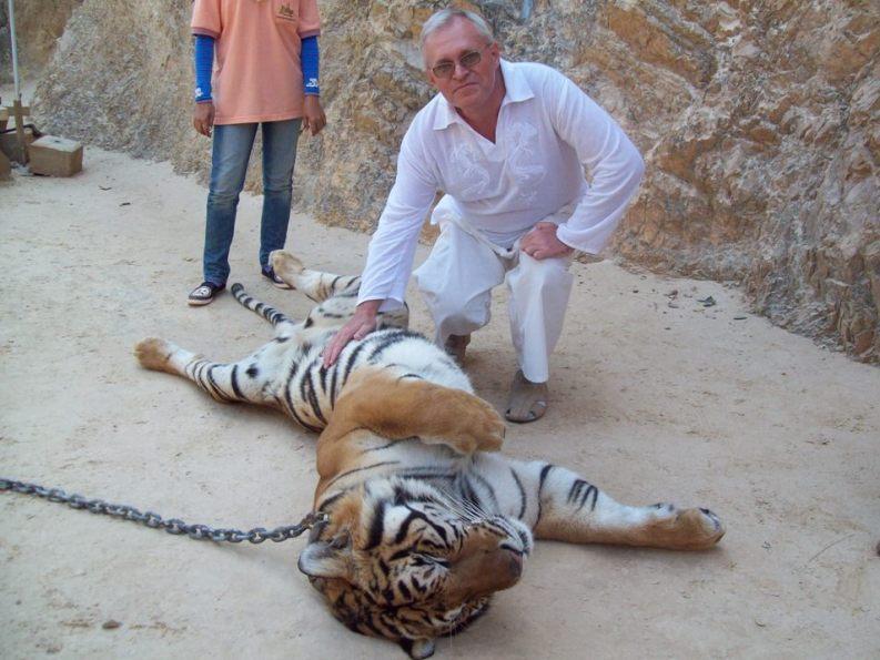Нос к носу с тиграми