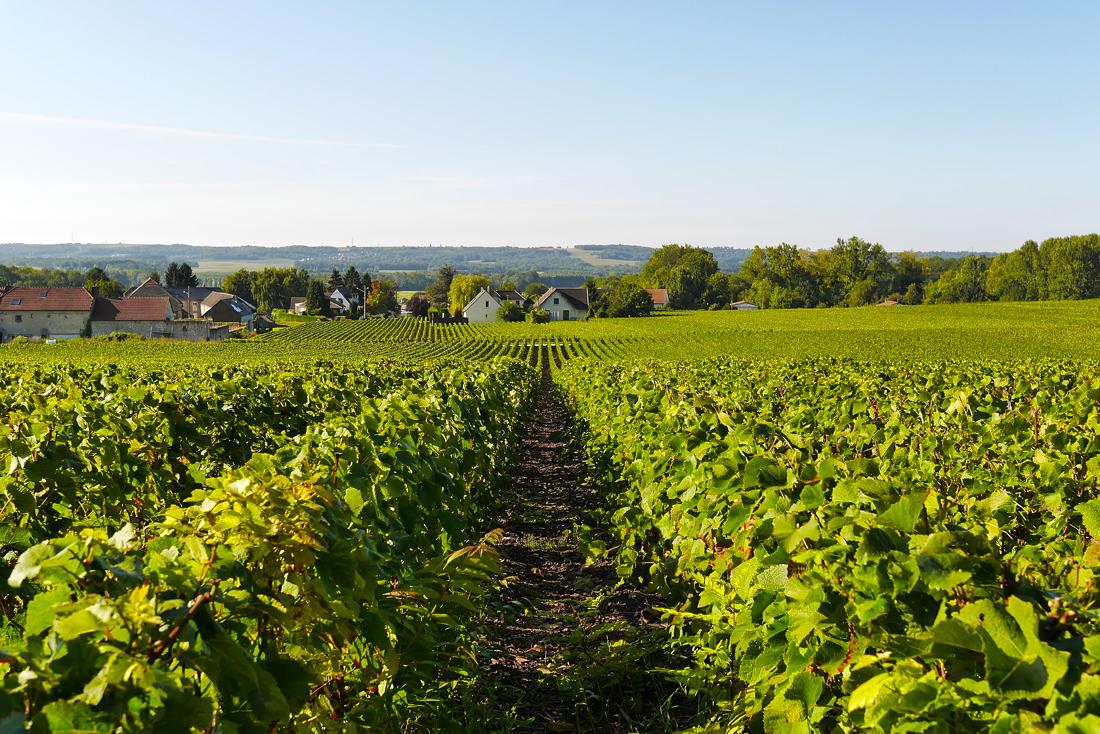 Дегустации шампанского во Франции