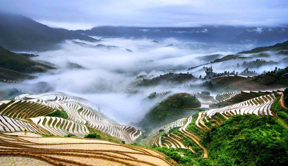 Рисовые поля Китая