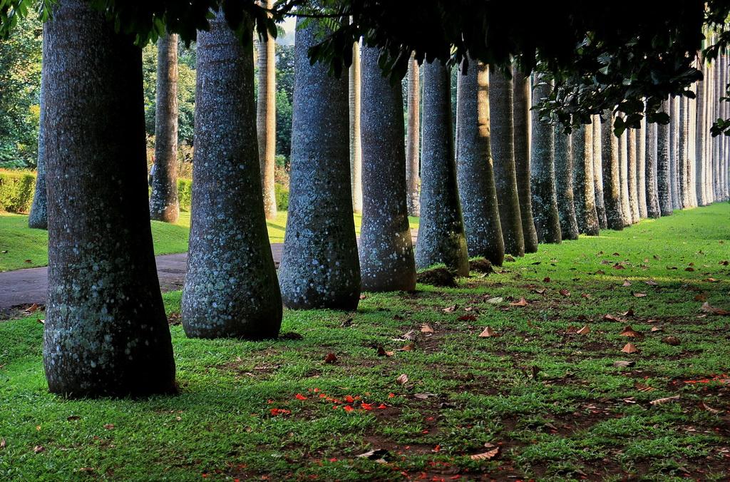 Шри ланка фото ботанического сада