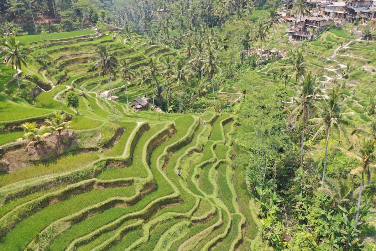 Бали: Убуд - Гили Т - Нуса Пенида - Чангу - Джимбаран, 16 дней, октябрь 2018