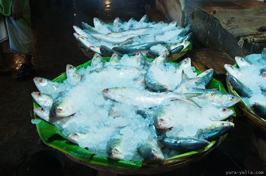 рыбы и их знакомые форум