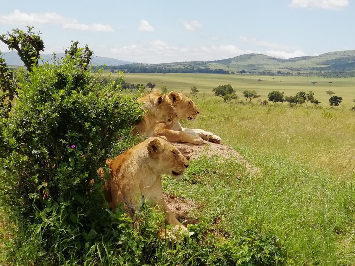 Кения в сезон дождей. Исполнение детской мечты