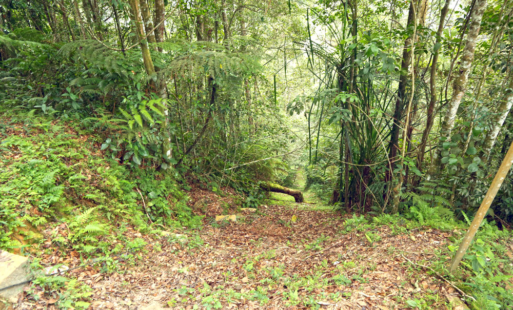 Cameron Highlands (Камерон Хайлэндс), Malaysia - совсем другая Малайзия