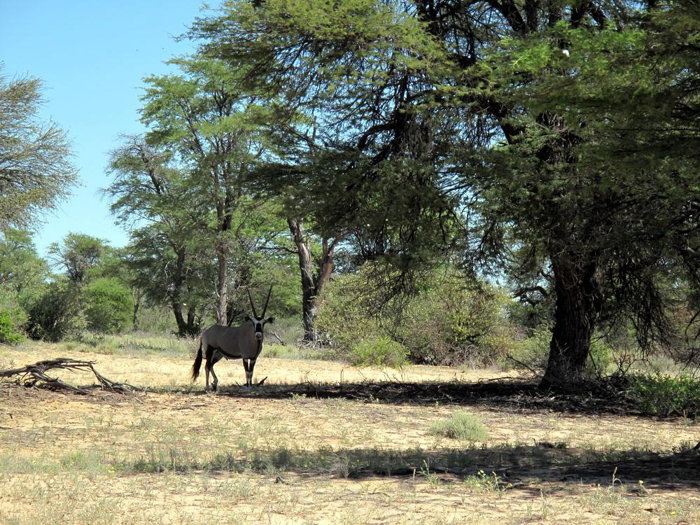 путешествия ботсвана фото