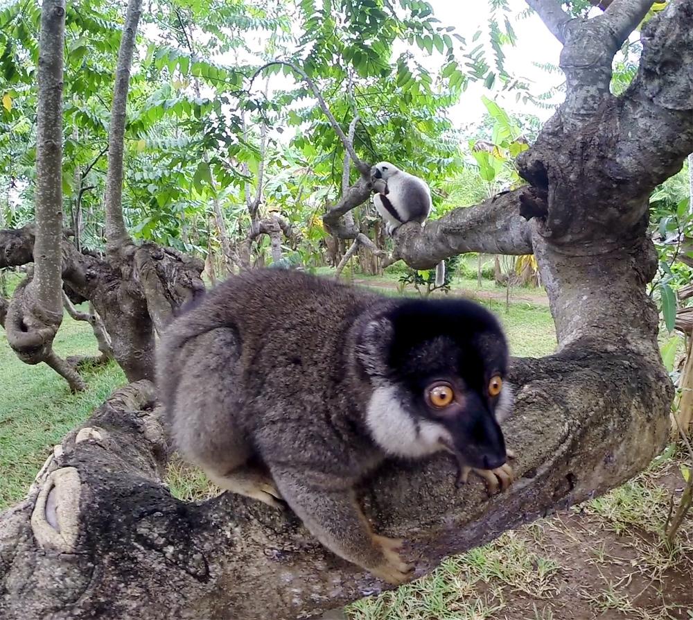 Остров Нуси-Бе Мадагаскар отзывы. Как добраться, что посмотреть, где жить на Нуси-Бе