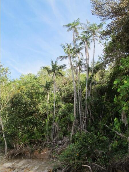 Борнео (Borneo) - крокодиловый рай