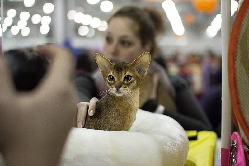 Выставки котов санкт-петербург