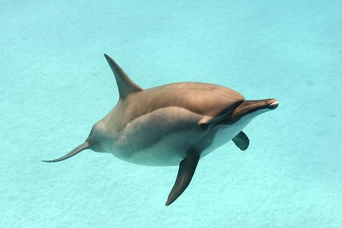 А дельфины добрые, А дельфины мокрые На тебя глядят Умными глазами