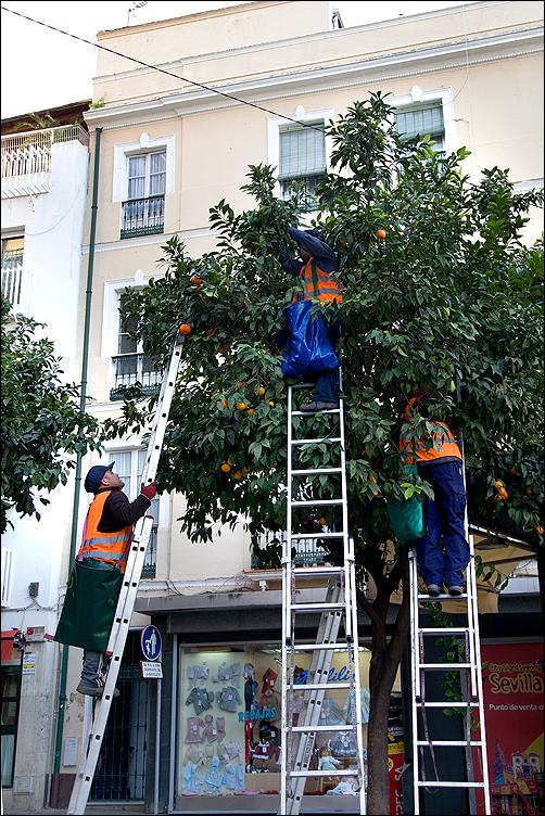 «Севилья ранит, вечна эта рана»… Знойный сентябрь и Новый год в апельсиновом городе (закончен)