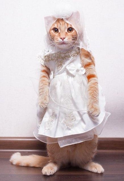 Три кота платья