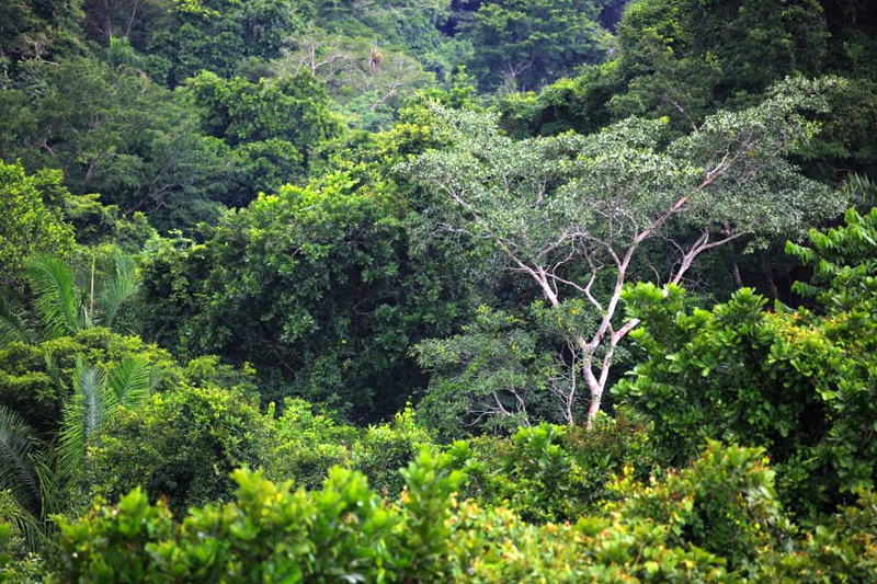 Пляжный отдых в Панаме: Жемчужные острова и Бокас дель Торо отзывы