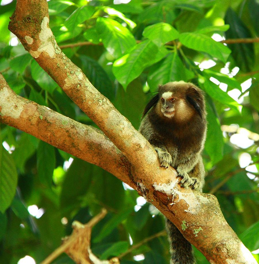 Шапада Диамантина национальный парк в Бразилии отзывы
