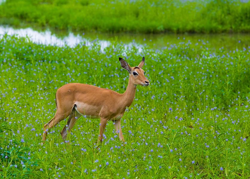 Занзибар, похожий на Мальдивы, и дорогое сафари в парк Селус, сентябрь 2018